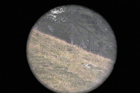 observation with binoculars in nature view
