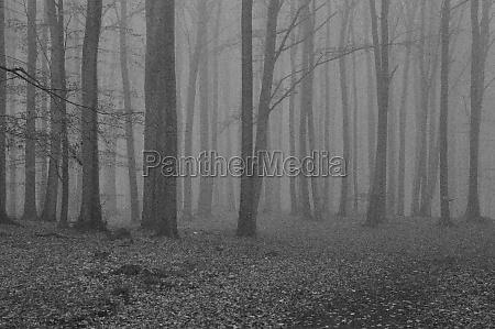 mystic black white forest