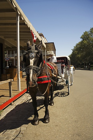 horse cart on a street