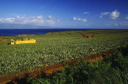 truck in field hawaii usa