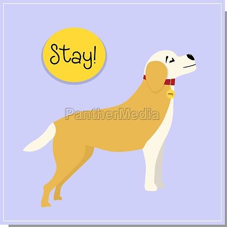 dog training command to stand beautiful