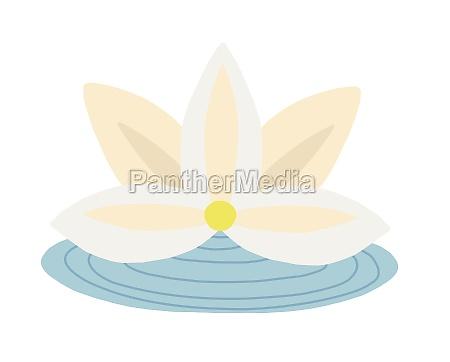 white lotus asian flower vector illustration