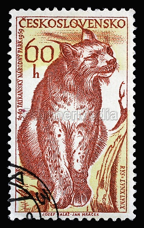 stamp printed in czechoslovakia shows eurasian