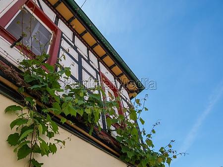 vine on a facade of a