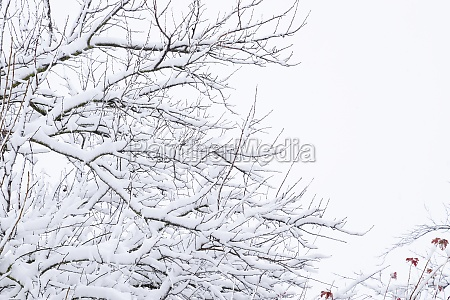 snow on the tree branches winter