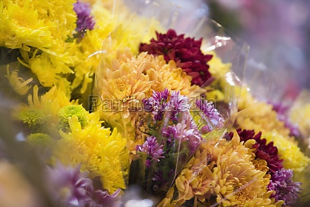 close up of flowers at a