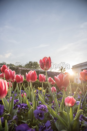 arrangement of colorful spring flowers in