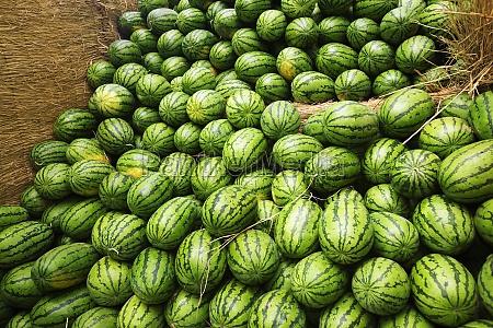 heap of watermelons zhigou shandong province