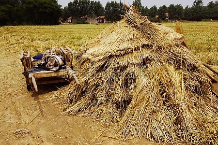cart near a haystack in a