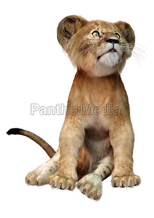 3d rendering lion cub on white
