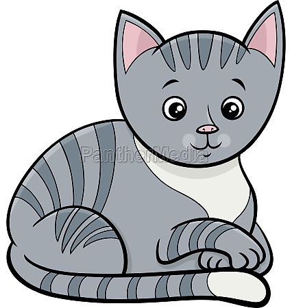 tabby cat or kitten cartoon animal