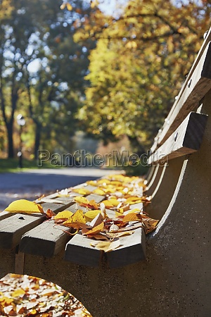 autumn leaves on park bench
