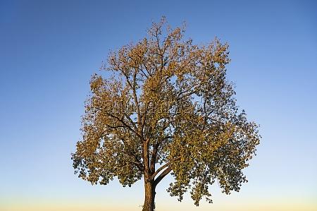 usa arkansas little rock autumn tree