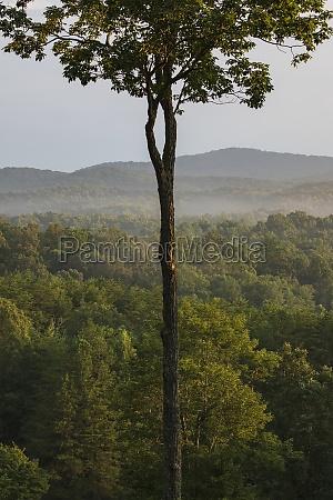 usa georgia blue ridge mountains fog