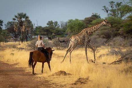 southern giraffe gallops past blonde on