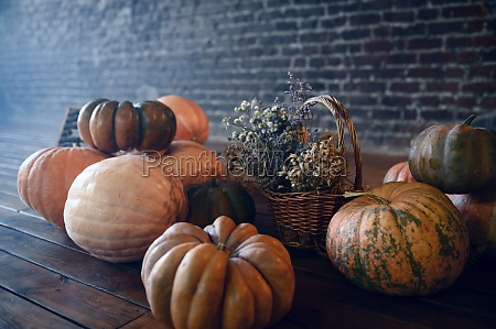 pumpkins and teddy bear nobody exorcism