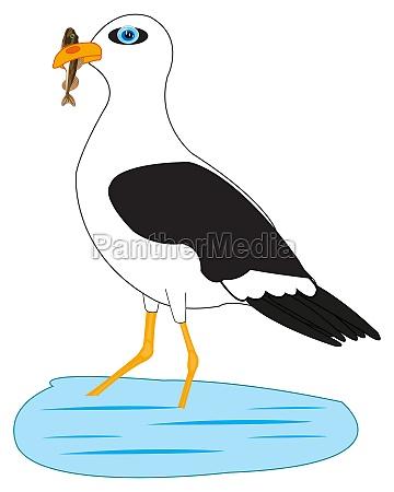 bird sea gull on fish sea