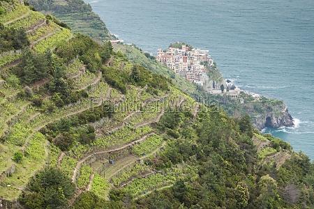 vineyards on coast cinque terre italy