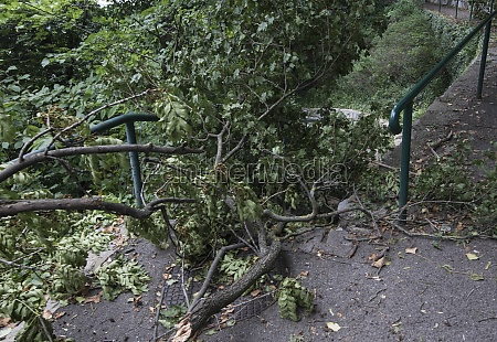 damage after storm in the park