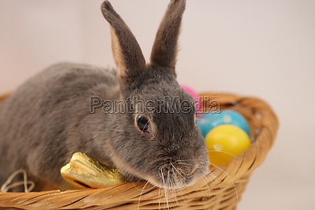 easter bunny sitting in the basket