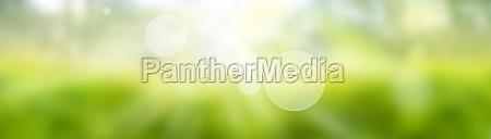 blurred green spring background