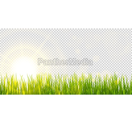 spring grass and sunlight panorama background