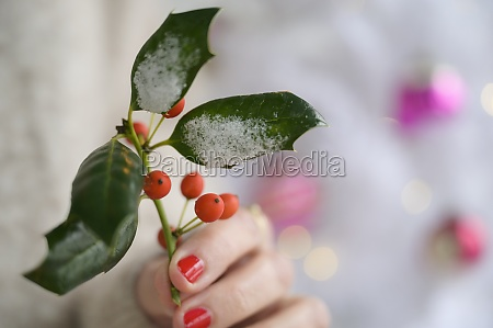 hand holding holly by christmas tree