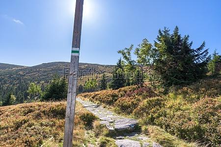 green trail to labski szczyt mountain