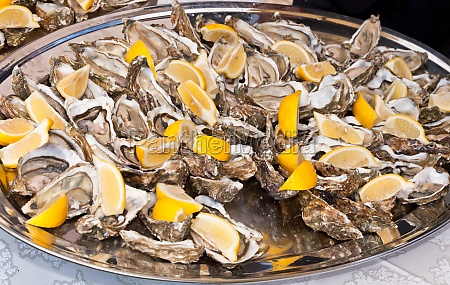 succulent fresh opened marine oysters