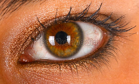 human brown eye detail