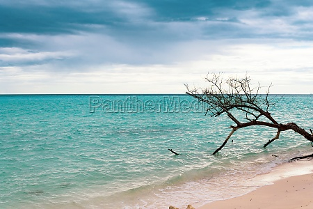 tree on the shore of the