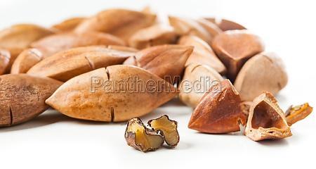 canarium ovatum known as pili nuts