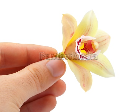 orchid flower between his fingers