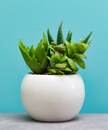 green succulent plants in white flower