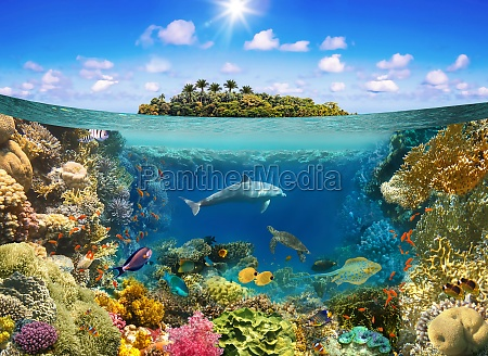 underwater, world., coral, fishes, of, red - 29641583