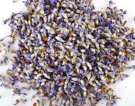 flowers of lavender