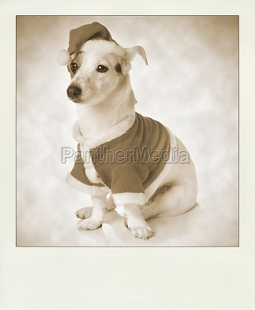 vintage polaroid with dog as santa