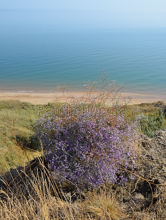 small purple flowers growing on the