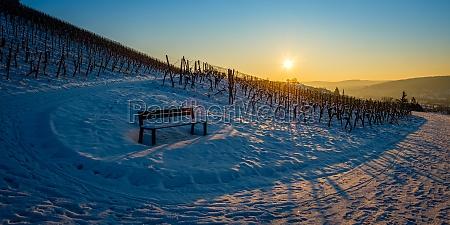 bench in vineyard landscape winter snow