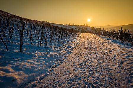 sun back lit in vineyard landscape