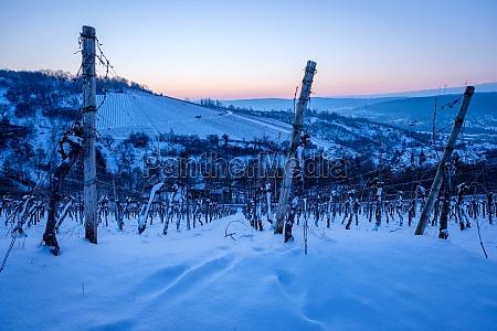 vineyard landscape winter snow morning dawn