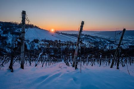sunrise in vineyard landscape winter snow