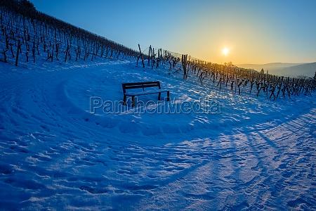 cold winter snow landscape vineyald with