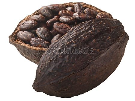 halved cocoa pod with whole fermented