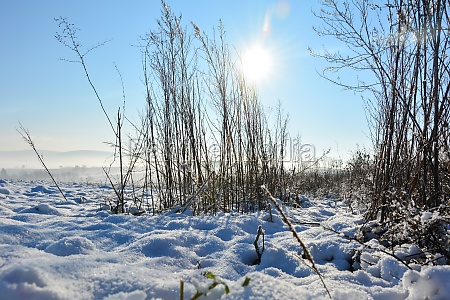 high grass in winter with a