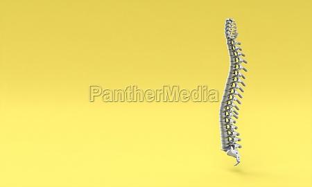 backbone on yellow background