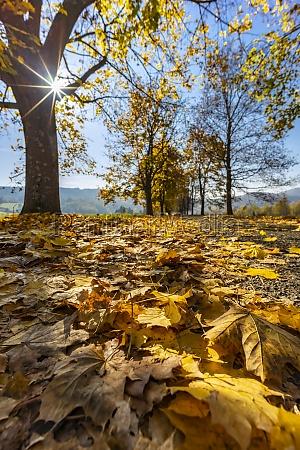 autumn alley near banhorvati in northern