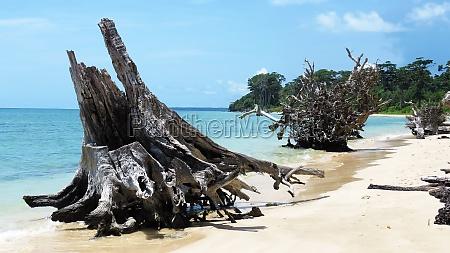 driftwood on a tropical beach