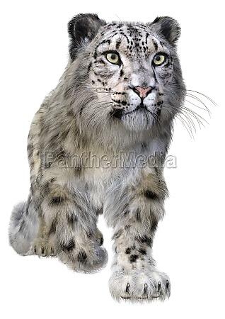 3d rendering snow leopard on white