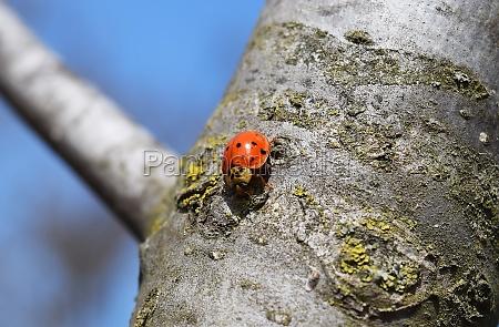 ladybird on a tree
